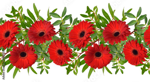 Seamless border with red gerbera flowers. Isolated
