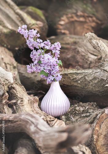 Fliederzweig in der Vase