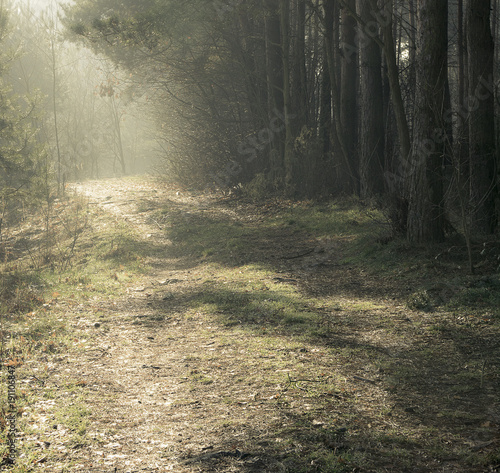 Fotobehang Weg in bos Wiosna