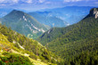 Quadro view of forest  mountains landscape