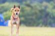 dog in the grassland