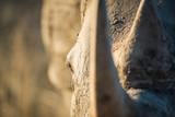 Rhino in the bush - 191156081