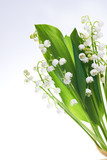 White flowers lilies of the valley isolated on white background