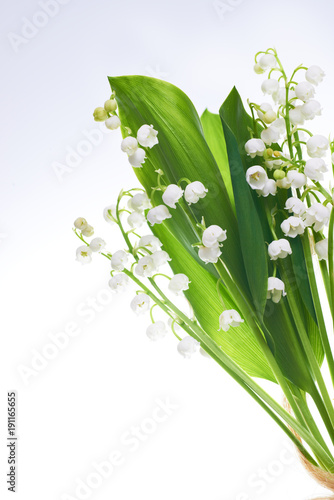 Fotobehang Lelietjes van dalen White flowers lilies of the valley isolated on white background