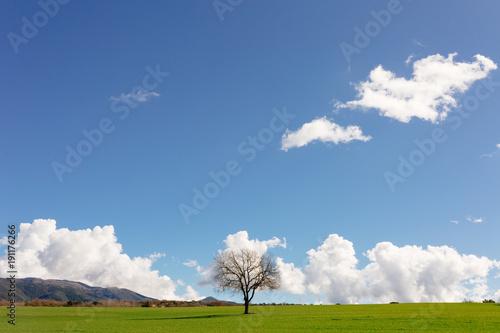 Paisaje primaveral de cielo azul y hierba verde