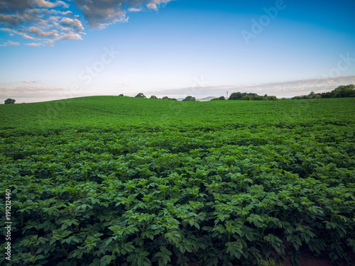 Fotobehang Zwart Summer countryside morning,Northern Ireland