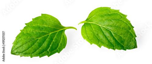 Foto op Canvas Verse groenten fresh herb, green peppermint isolated on white