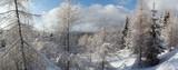 Zimowy las w Górach izerskich, Polska