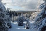 Zimowy las w Górach izerskich