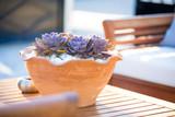 Suculenta in a flower pot - 191222420
