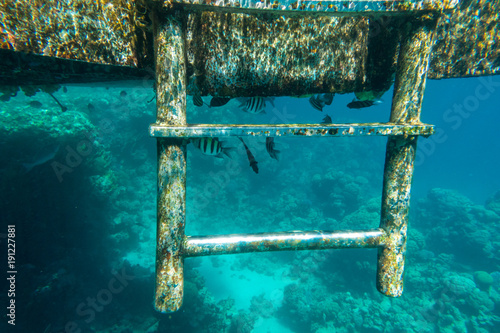 Little tropical fish living under pontoon in sea