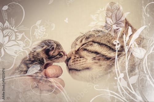 Fotobehang Tijger Bengal Kitten