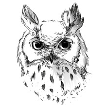 Owl's Head Black And  Drawing Sticker