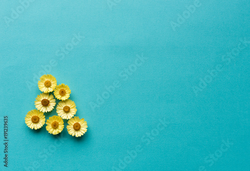 Directly above view of yellow everlasting daisies against blue textured background