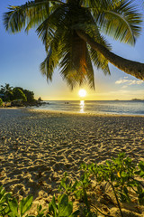 beautiful romantic sunset with a palm in paradise, seychelles beach 10