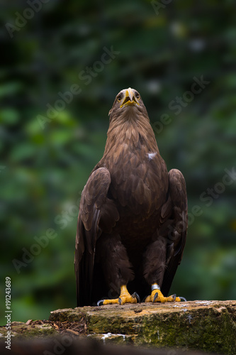 Aluminium Eagle Adler
