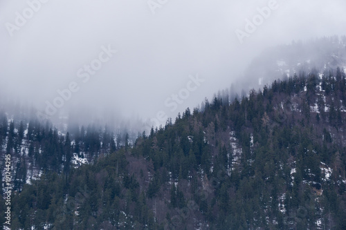 Fotobehang Betoverde Bos Fog descending upon a fir forest in the mountains of Austria in winter