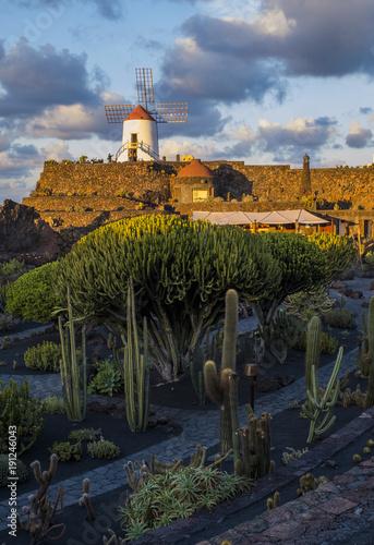 Cactus garden in Guatiza village, Lanzarote, Canary Islands, Spain