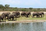Wilde Elefanten Herde in Uganda Afrika - 191247439