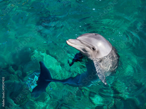 Aluminium Dolfijn Smiling dolphin