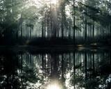 De Soto National Forest, Mississippi, USA - 191278625