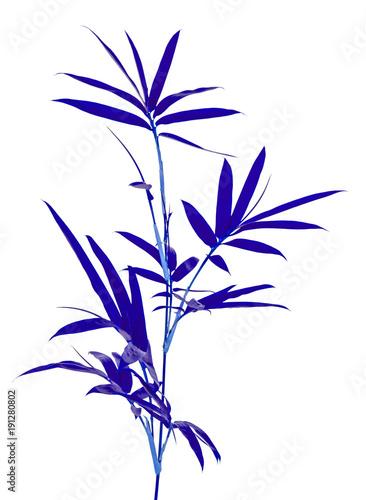 tiges de bambou bleu, fond blanc