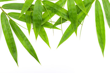 bamboo leaves frame isolated on white background.