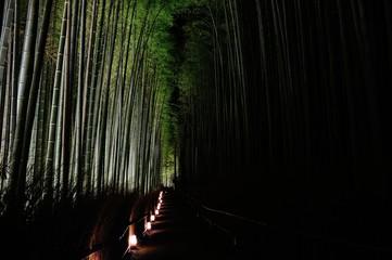 竹林./ライトアップされた竹林です.