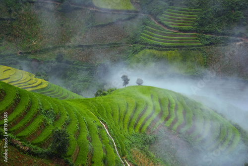 Deurstickers Rijstvelden rice terrace in Mu Cang Chai, landscape terraced rice field , Vietnam