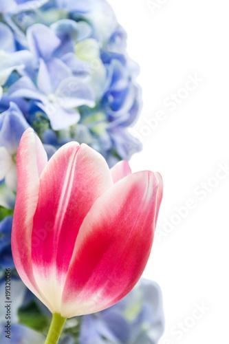 Aluminium Hydrangea Tulpen und Hortensien