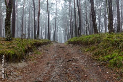 Fotobehang Weg in bos Gęsta mgła w lesie w Polsce