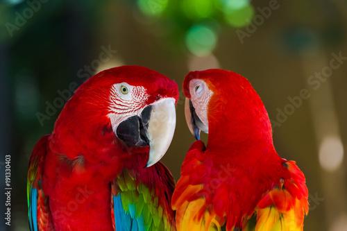 Fotobehang Papegaai Parrots in Bali Island Indonesia