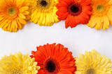 bright multi-colored gerberas on a white background - 191335251