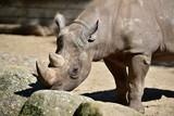 Nashorn Safari - 191342408