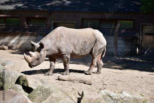 Fotobehang Neushoorn Nashorn Safari