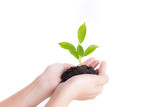 Hands holding seedling on white background,Ecology concept - 191350226