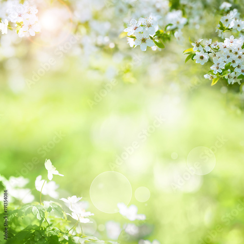 Spring landscape with cherry blossoms