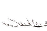 Branch isolated on white background. - 191361436