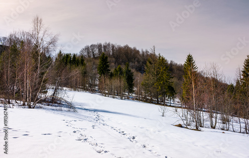 Fotobehang Chocoladebruin mixed forest on snowy slope