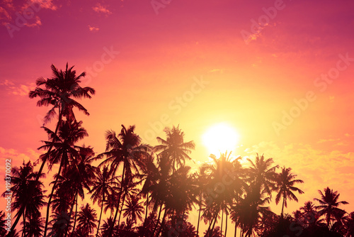 Fotobehang Koraal Tropical palm trees silhouettes at sunset. Vivid tropical beach sunset with big warm shining sun on vacation island.