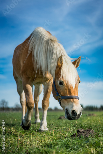 Aluminium Paarden Grazing Horse In A Meadow