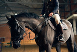 Horse reder on a horse in a riding arena sits in the saddle and legs in stirrups