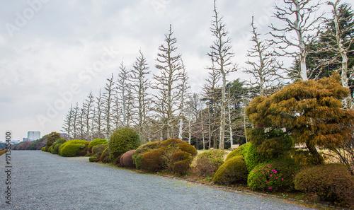 Fotobehang Azalea Park tokyo