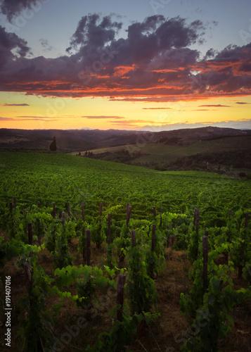 Aluminium Wijngaard Vigneti del Chianti al tramonto