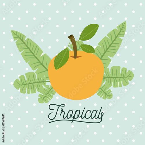 orange fruits with leaves on decorative lines color background vector illustration