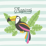 toucan bird tropical with leaves on decorative lines color background vector illustration - 191418694