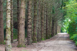 Park alley with tall trees - 191425402