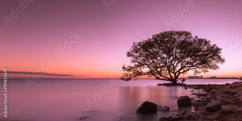 Aluminium Tree silhouette in water during sunset