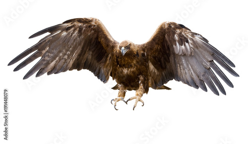 Aluminium Eagle golden eagle, isolated