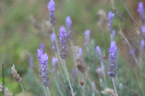 Fotobehang Lavendel Light lavender background